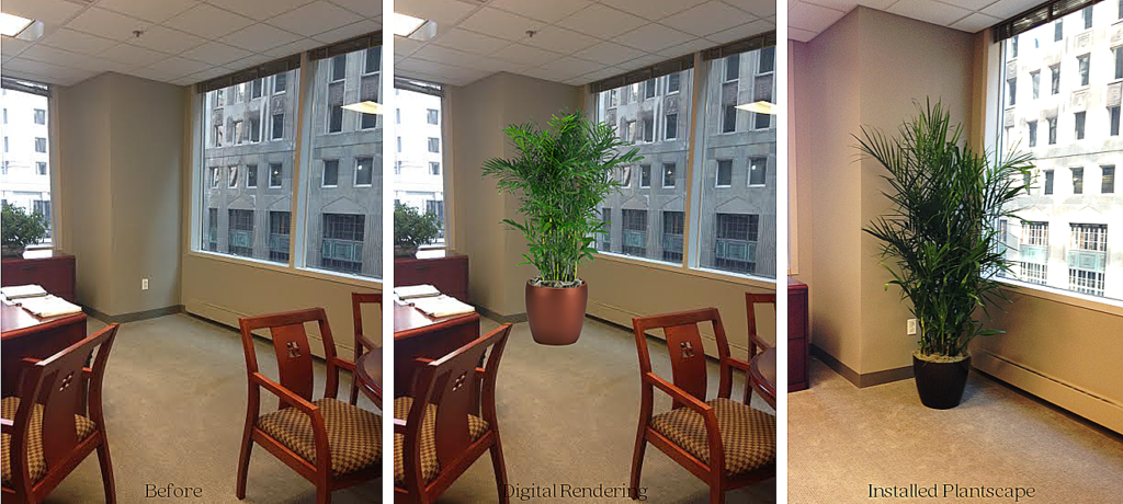 Before_After_Bamboo Palm